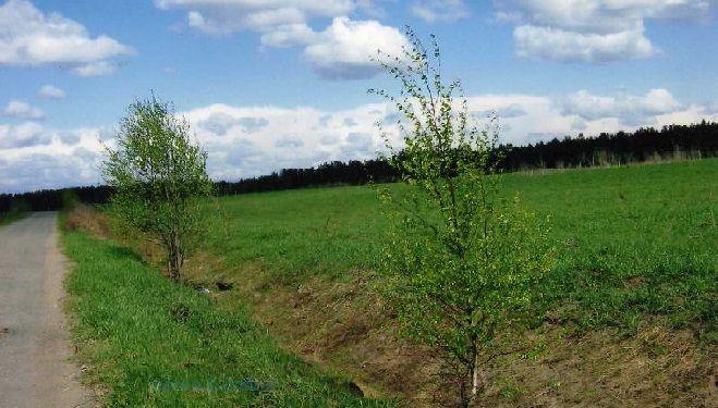 Как приватизировать земельный участок как правильно оформить