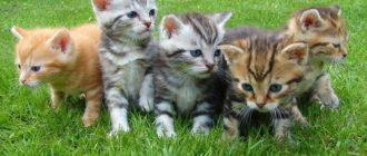 Закон о защите животных